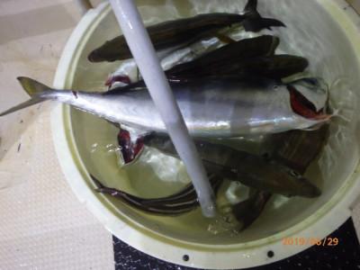 秀吉丸の2019年6月29日(土)2枚目の写真