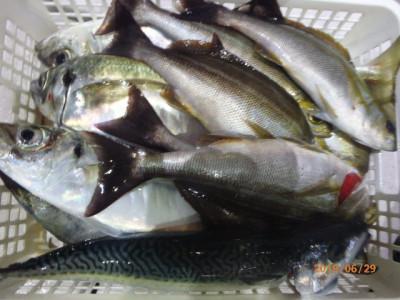 秀吉丸の2019年6月29日(土)4枚目の写真