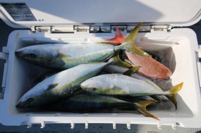 西岡遊漁の2019年5月22日(水)4枚目の写真