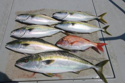 西岡遊漁の2019年6月17日(月)3枚目の写真