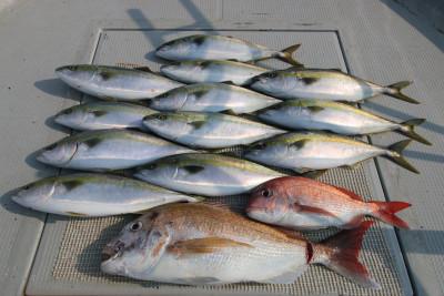西岡遊漁の2019年6月18日(火)3枚目の写真