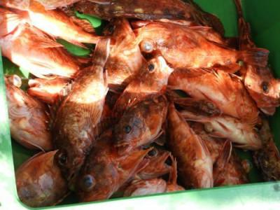 釣具の海友の2019年5月24日(金)5枚目の写真