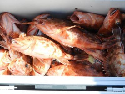 釣具の海友の2019年5月26日(日)2枚目の写真