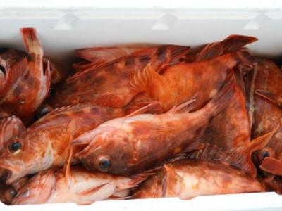 釣具の海友の2019年5月26日(日)4枚目の写真