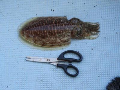 釣具の海友の2019年5月30日(木)2枚目の写真