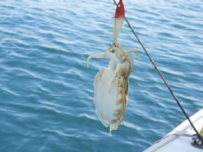 釣具の海友の2019年5月30日(木)3枚目の写真