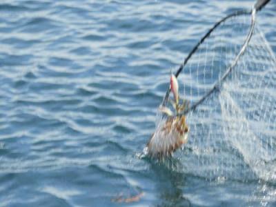 釣具の海友の2019年5月30日(木)4枚目の写真