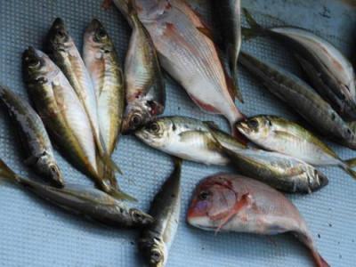 釣具の海友の2019年6月14日(金)1枚目の写真