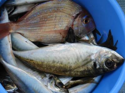 釣具の海友の2019年6月14日(金)2枚目の写真
