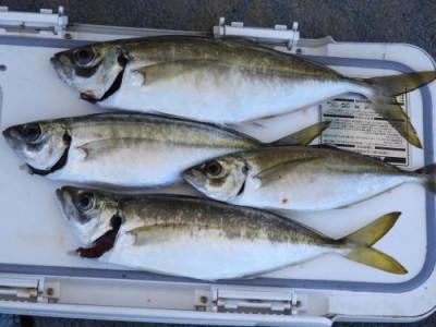 釣具の海友の2019年6月16日(日)1枚目の写真