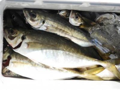 釣具の海友の2019年6月16日(日)2枚目の写真