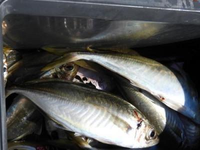 釣具の海友の2019年6月17日(月)5枚目の写真