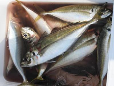 釣具の海友の2019年6月19日(水)4枚目の写真