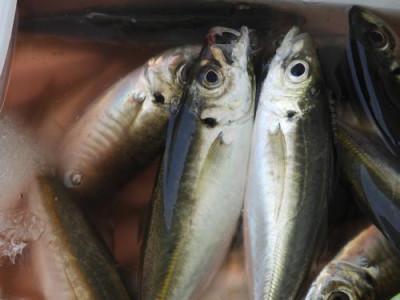 釣具の海友の2019年6月22日(土)5枚目の写真