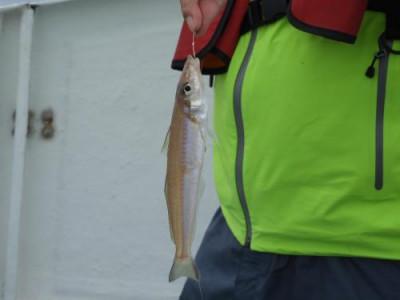 釣具の海友の2019年6月29日(土)1枚目の写真