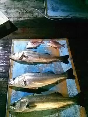 すずらん丸の2019年7月17日(水)1枚目の写真