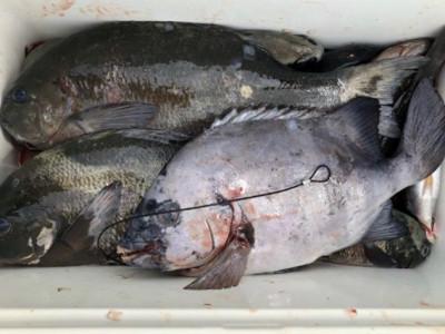 土肥釣りセンターの2019年7月25日(木)2枚目の写真