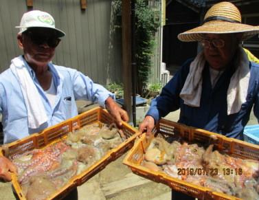 奥村釣船の2019年7月24日(水)2枚目の写真
