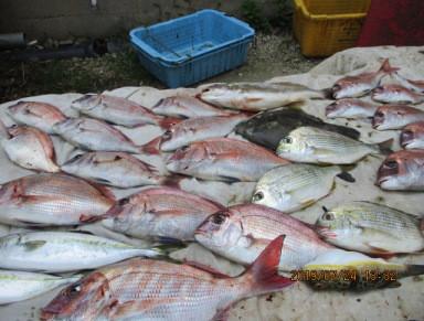 奥村釣船の2019年7月24日(水)3枚目の写真