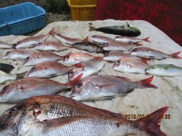 奥村釣船の2019年7月24日(水)4枚目の写真