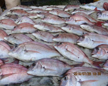 奥村釣船の2019年7月26日(金)3枚目の写真