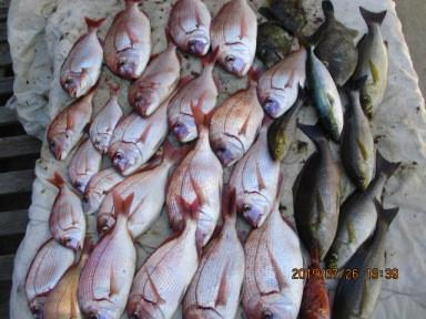 奥村釣船の2019年7月26日(金)4枚目の写真