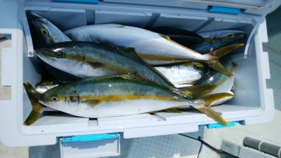 アラタニ釣具店の2019年8月4日(日)1枚目の写真