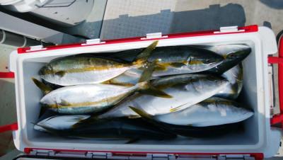 アラタニ釣具店の2019年8月4日(日)2枚目の写真
