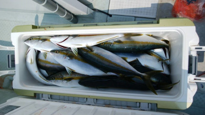 アラタニ釣具店の2019年8月4日(日)3枚目の写真