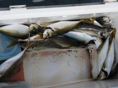 釣具の海友の2019年7月6日(土)1枚目の写真