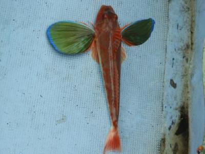 釣具の海友の2019年7月13日(土)4枚目の写真