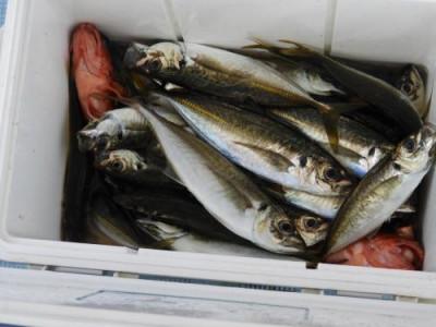 釣具の海友の2019年7月16日(火)3枚目の写真