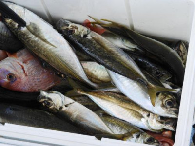 釣具の海友の2019年7月16日(火)5枚目の写真