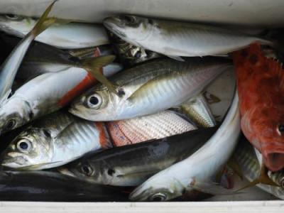 釣具の海友の2019年7月18日(木)4枚目の写真