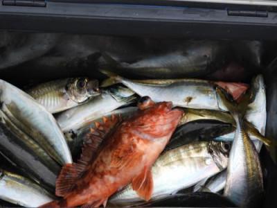 釣具の海友の2019年7月18日(木)5枚目の写真