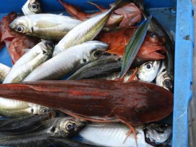 釣具の海友の2019年7月23日(火)3枚目の写真