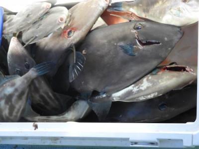 釣具の海友の2019年7月27日(土)4枚目の写真