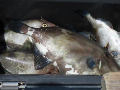 釣具の海友の2019年7月27日(土)5枚目の写真