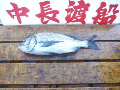 中長渡船の2019年8月11日(日)2枚目の写真