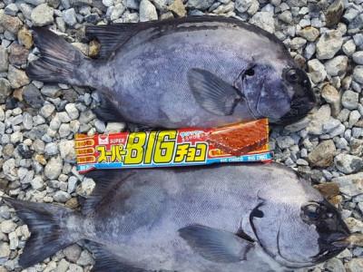 乙島丸の2019年7月26日(金)1枚目の写真