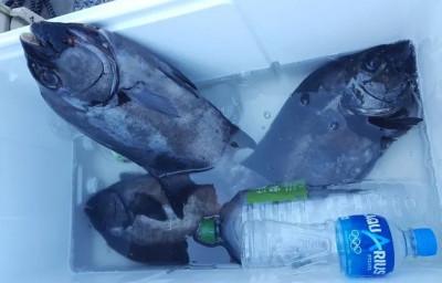 乙島丸の2019年7月31日(水)1枚目の写真