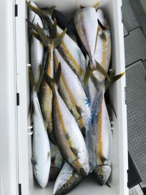 アラタニ釣具店の2019年8月22日(木)2枚目の写真