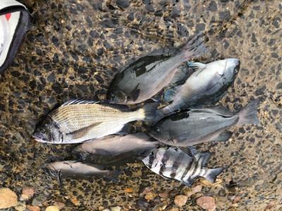 政運丸の2019年9月5日(木)3枚目の写真