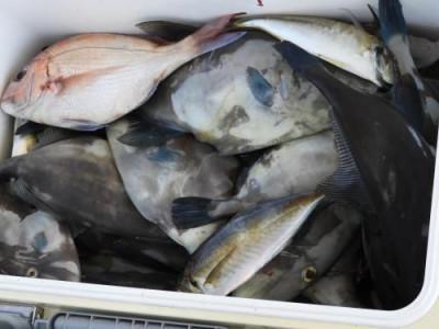釣具の海友の2019年8月10日(土)4枚目の写真