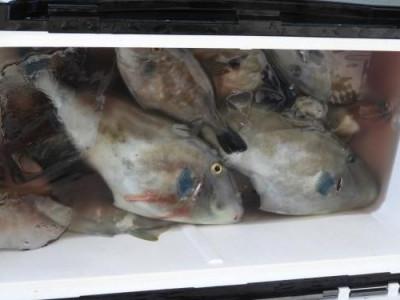 釣具の海友の2019年8月10日(土)5枚目の写真