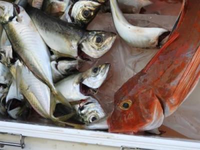 釣具の海友の2019年8月17日(土)1枚目の写真