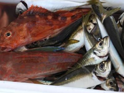 釣具の海友の2019年8月17日(土)2枚目の写真