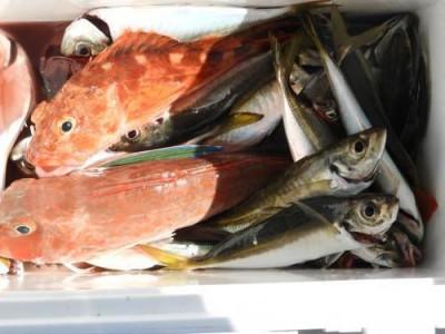 釣具の海友の2019年8月17日(土)3枚目の写真