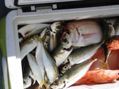 釣具の海友の2019年8月17日(土)4枚目の写真