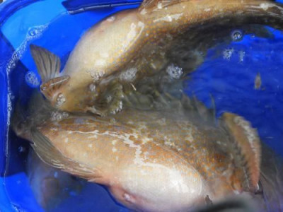 釣具の海友の2019年8月19日(月)2枚目の写真